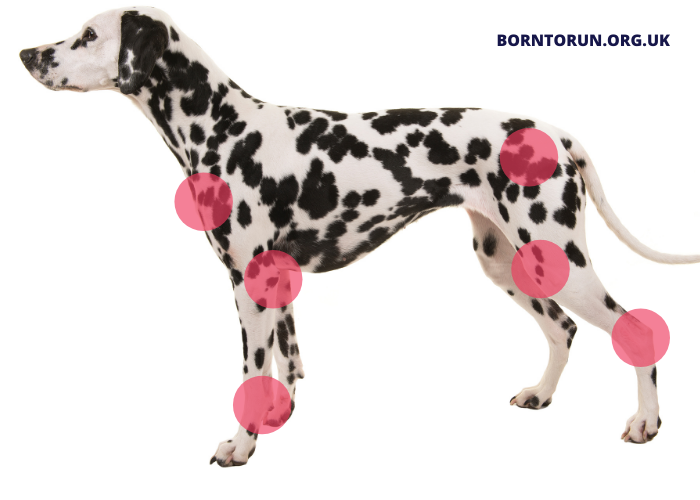Dog Joints Core Core conditioning to help joint pain