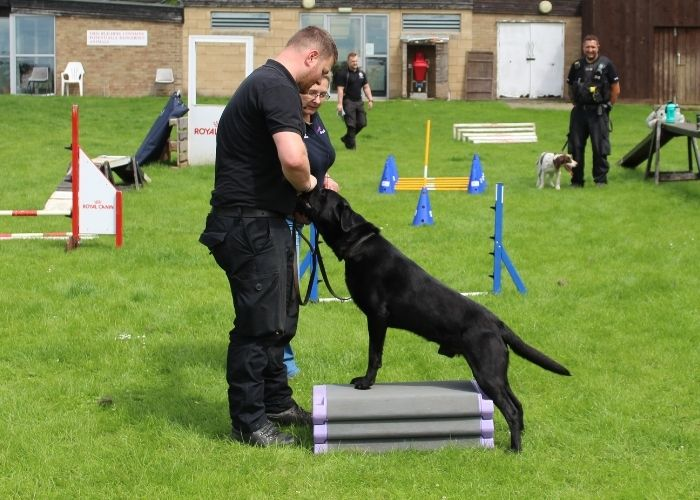 Police dog performing a core conditioning stretch with Born to Run